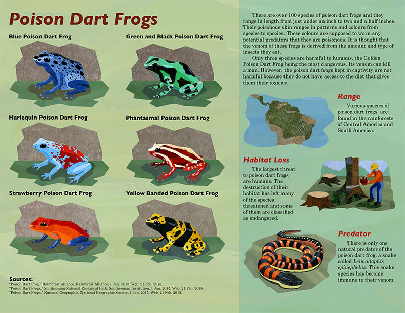 Poison Dart Frogs Ashley Hersee Illustration